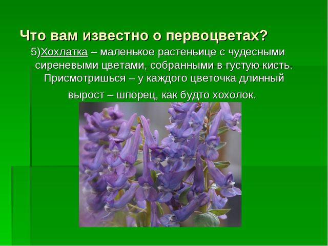 Что вам известно о первоцветах? 5)Хохлатка – маленькое растеньице с чудесными...
