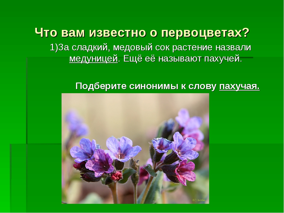 Что вам известно о первоцветах? 1)За сладкий, медовый сок растение назвали ме...