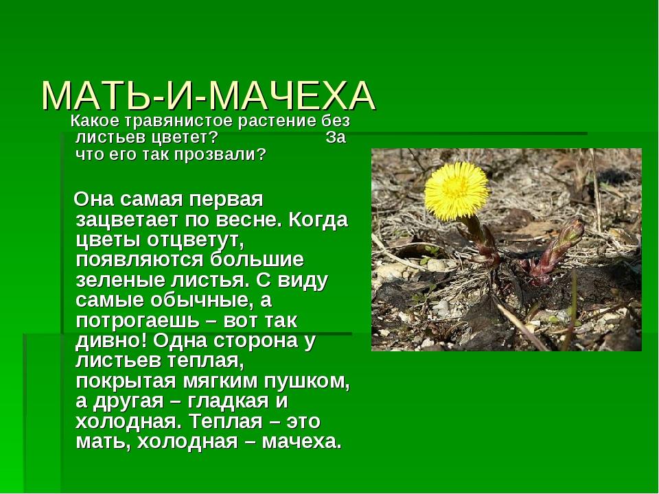 Почему у одного и того же растения черешковые листья имеют разную длину черешка