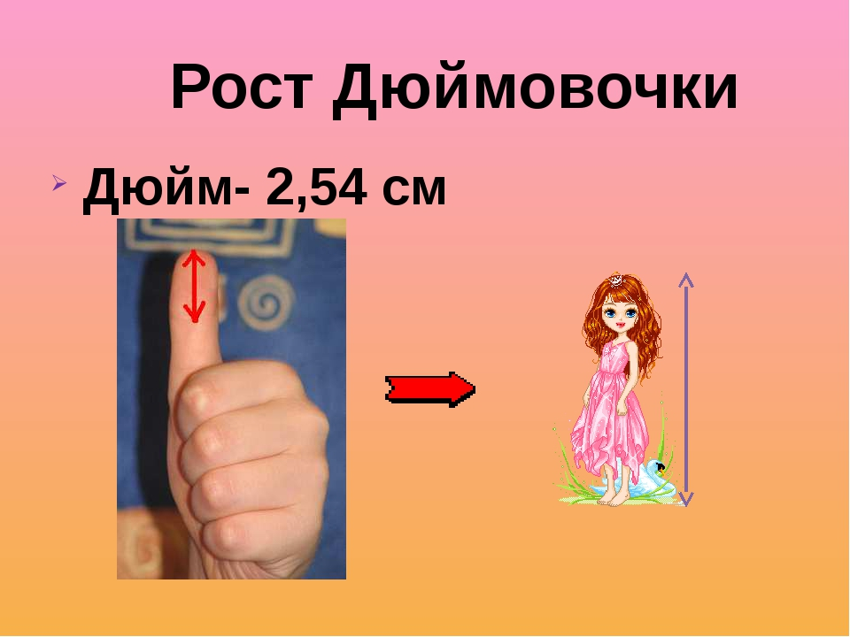 Дюйм- 2,54 см 2,54 см Рост Дюймовочки