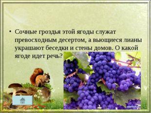 Сочные гроздья этой ягоды служат превосходным десертом, а вьющиеся лианы укра