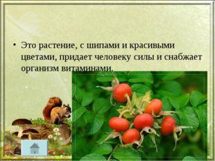 Это растение, с шипами и красивыми цветами, придает человеку силы и снабжает