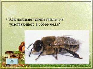 Как называют самца пчелы, не участвующего в сборе меда?