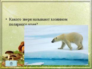 Какого зверя называют хозяином полярного края?