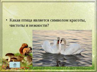 Какая птица является символом красоты, чистоты и нежности?