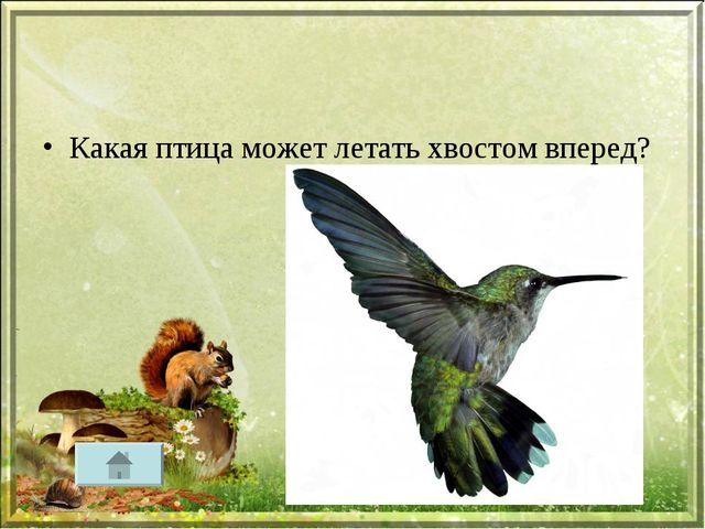 Какая птица может летать хвостом вперед?