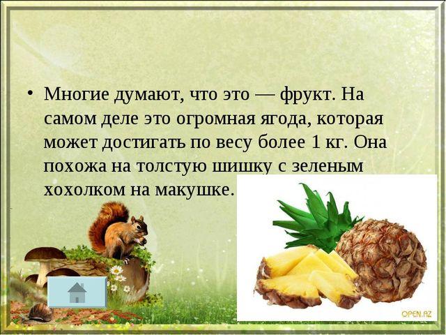 Многие думают, что это — фрукт. На самом деле это огромная ягода, которая мож...