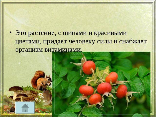 Это растение, с шипами и красивыми цветами, придает человеку силы и снабжает...