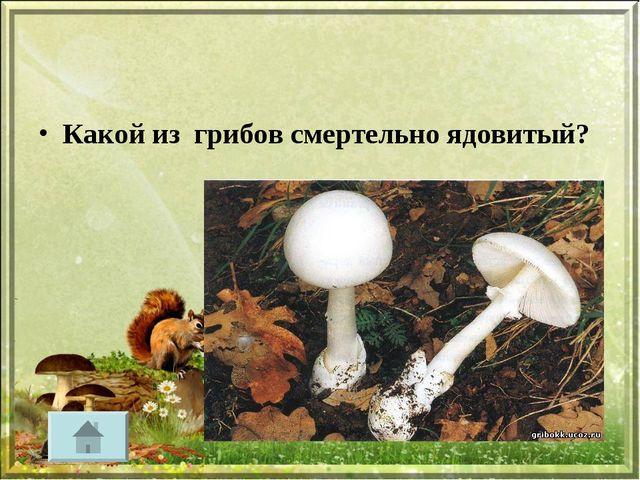 Какой из грибов смертельно ядовитый?