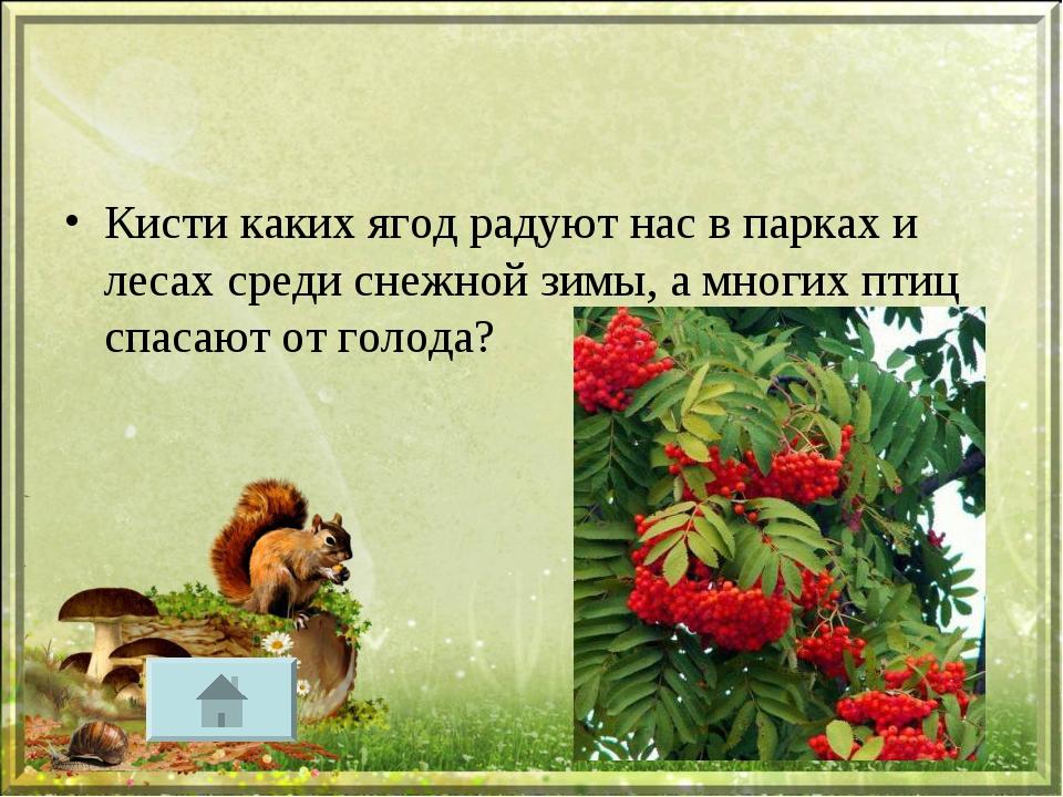 Кисти каких ягод радуют нас в парках и лесах среди снежной зимы, а многих пти...