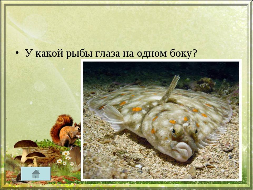 У какой рыбы глаза на одном боку?