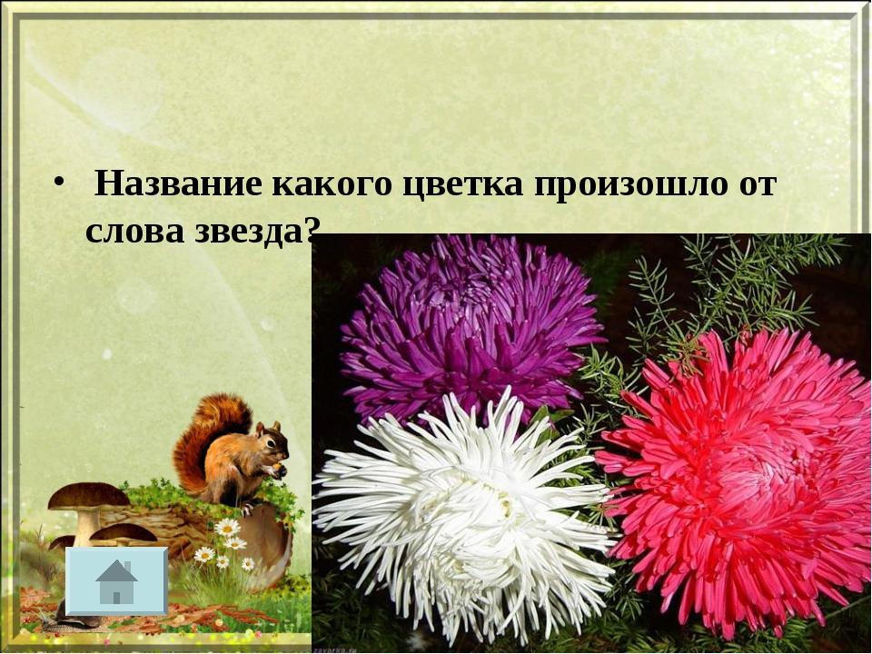 Название какого цветка произошло от слова звезда?