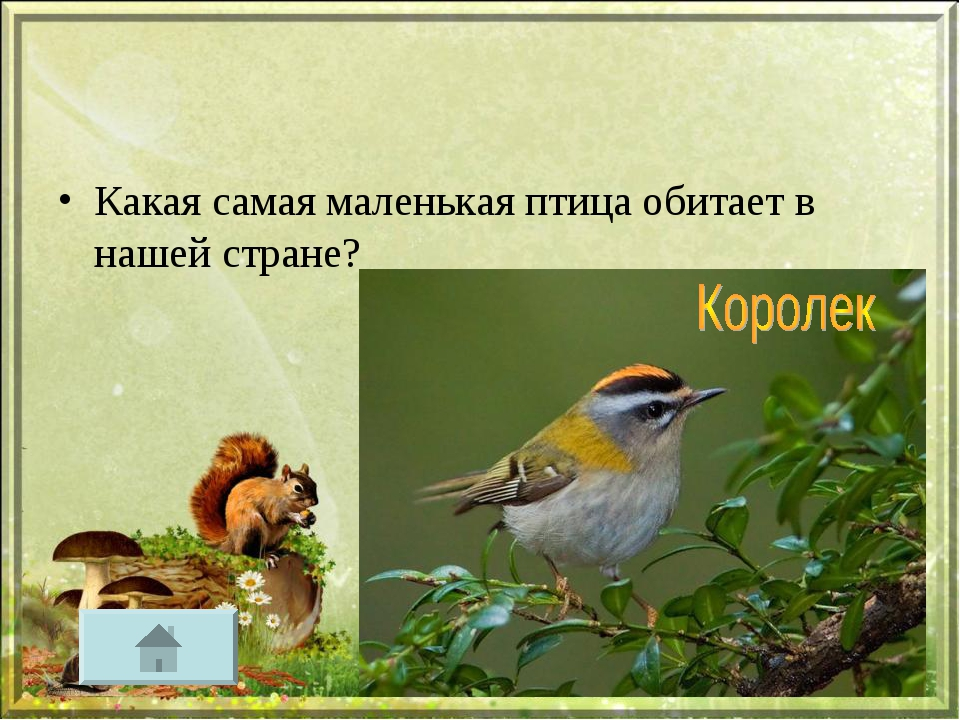 Какая самая маленькая птица обитает в нашей стране?