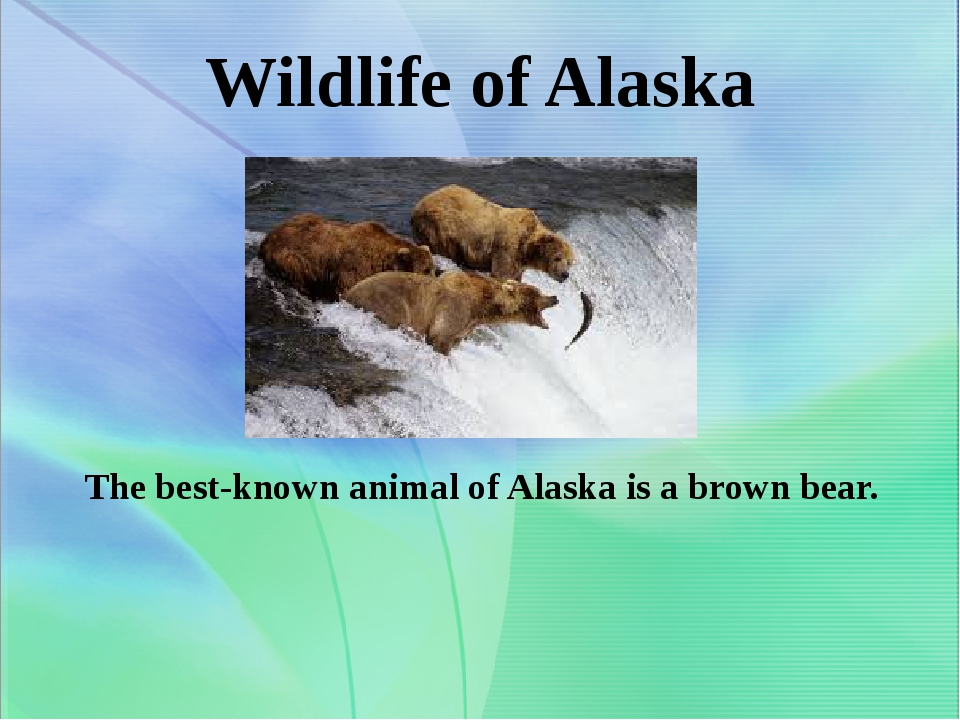Wildlife of Alaska The best-known animal of Alaska is a brown bear.