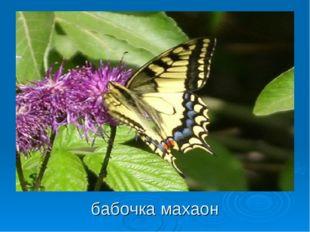 бабочка махаон