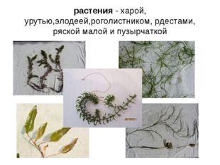 растения - харой, урутью,элодеей,роголистником, рдестами, ряской малой и пузы