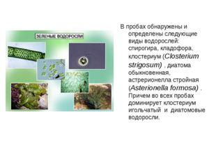 В пробах обнаружены и определены следующие виды водорослей: спирогира, кладоф