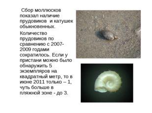 Сбор моллюсков показал наличие прудовиков и катушек обыкновенных. Количество