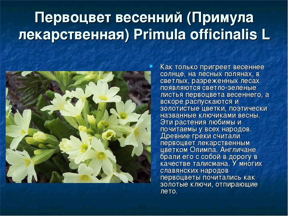 Цветы первоцветы фото и описание