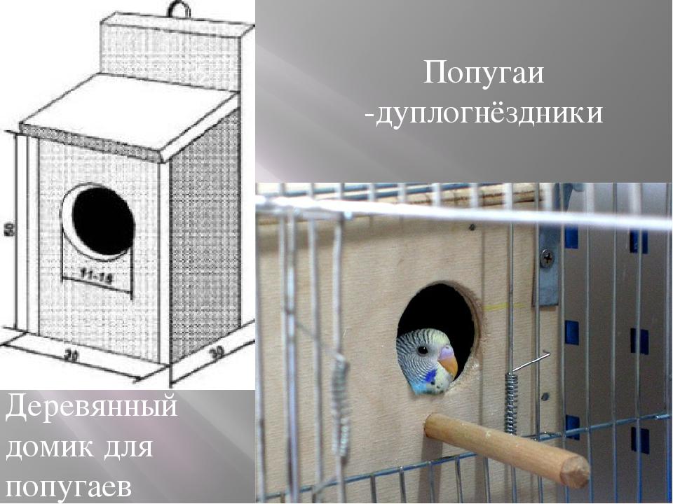 Попугаи -дуплогнёздники Деревянный домик для попугаев
