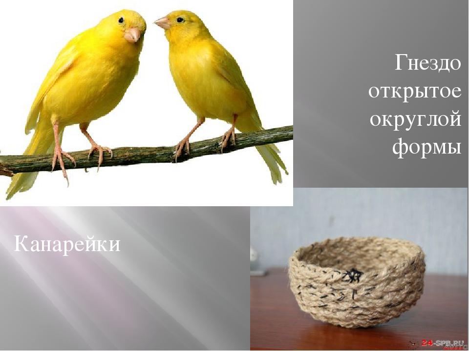 Канарейки Гнездо открытое округлой формы
