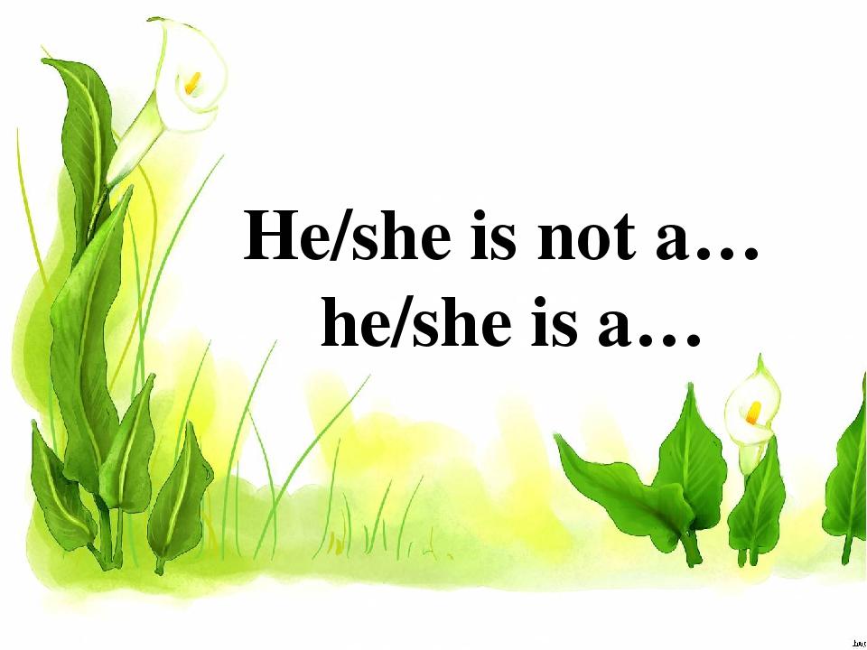 He/she is not a… he/she is a…