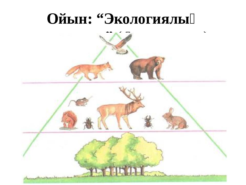 """Ойын: """"Экологиялық пирамида"""" ( Қорытынды)"""
