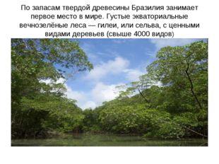 По запасам твердой древесины Бразилия занимает первое место в мире. Густые эк