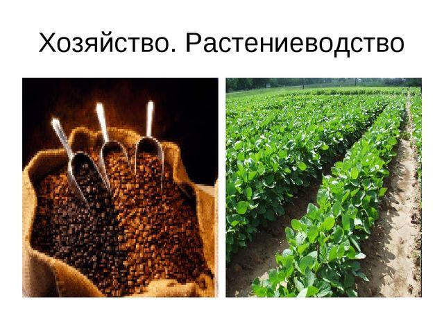 Хозяйство. Растениеводство