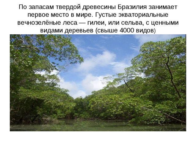 По запасам твердой древесины Бразилия занимает первое место в мире. Густые эк...