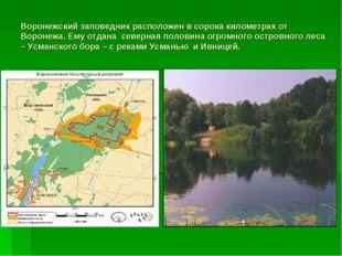 Воронежский заповедник расположен в сорока километрах от Воронежа. Ему отдана