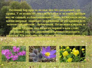 Весенний бор просто не мыслим без загадочной сон –травы. У ее пушисто –мягких