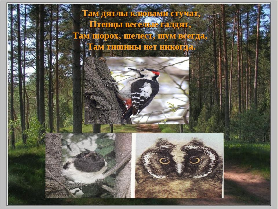 Там дятлы клювами стучат, Птенцы веселые галдят, Там шорох, шелест, шум всег...