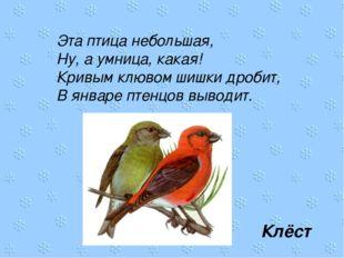 Эта птица небольшая, Ну, а умница, какая! Кривым клювом шишки дробит, В январ