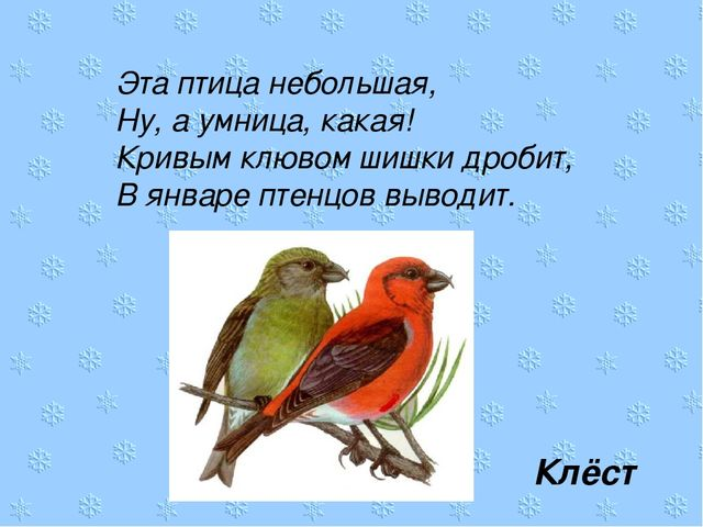 Эта птица небольшая, Ну, а умница, какая! Кривым клювом шишки дробит, В январ...