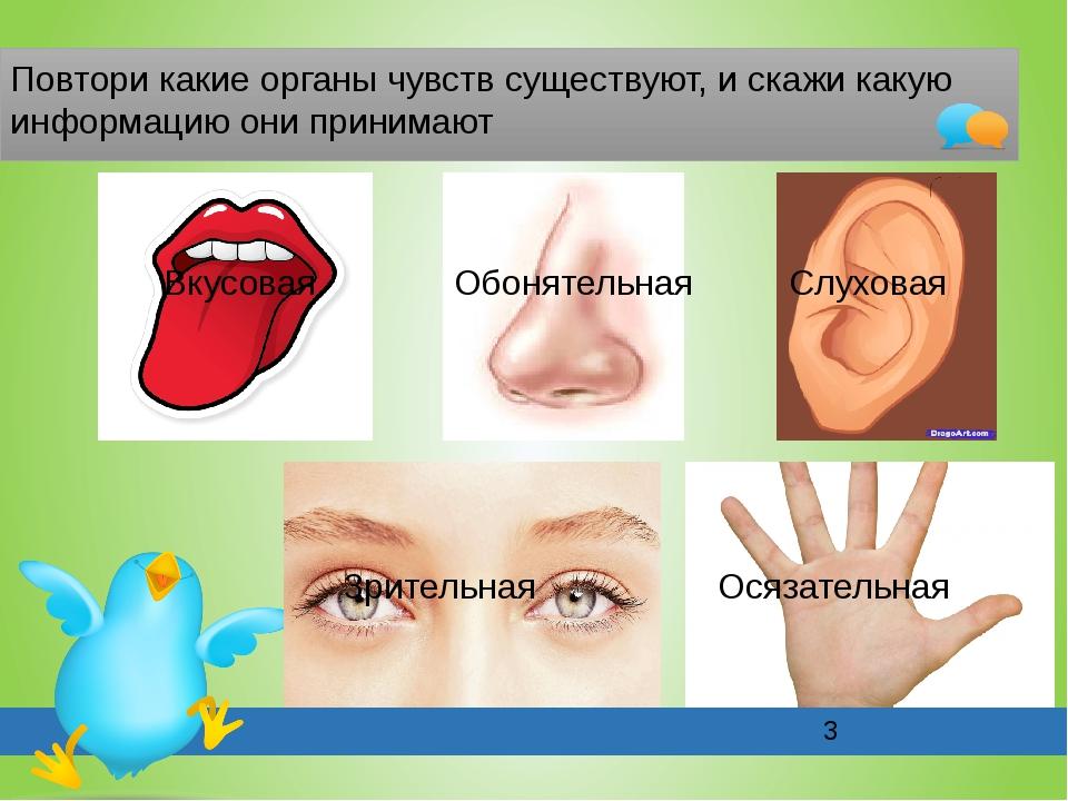 Повтори какие органы чувств существуют, и скажи какую информацию они принима...
