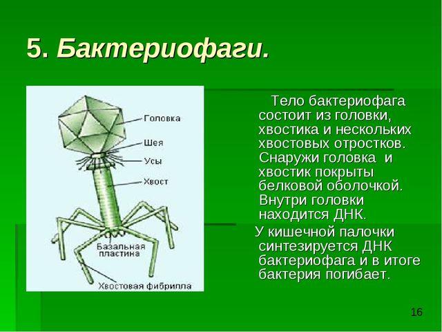 5. Бактериофаги. Тело бактериофага состоит из головки, хвостика и нескольких...