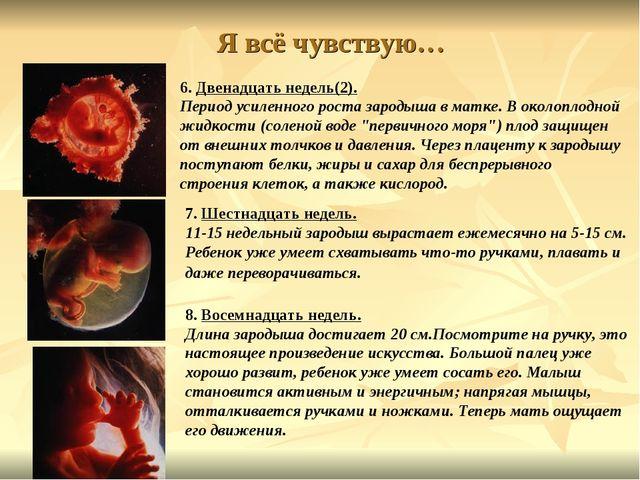 Я всё чувствую… 6. Двенадцать недель(2). Период усиленного роста зародыша в м...
