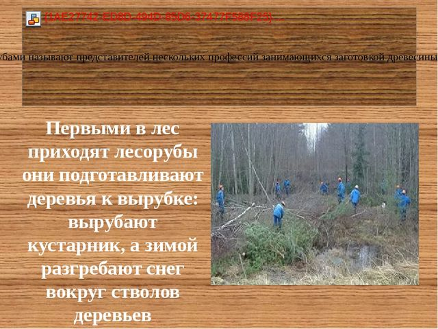 Первыми в лес приходят лесорубы они подготавливают деревья к вырубке: вырубаю...