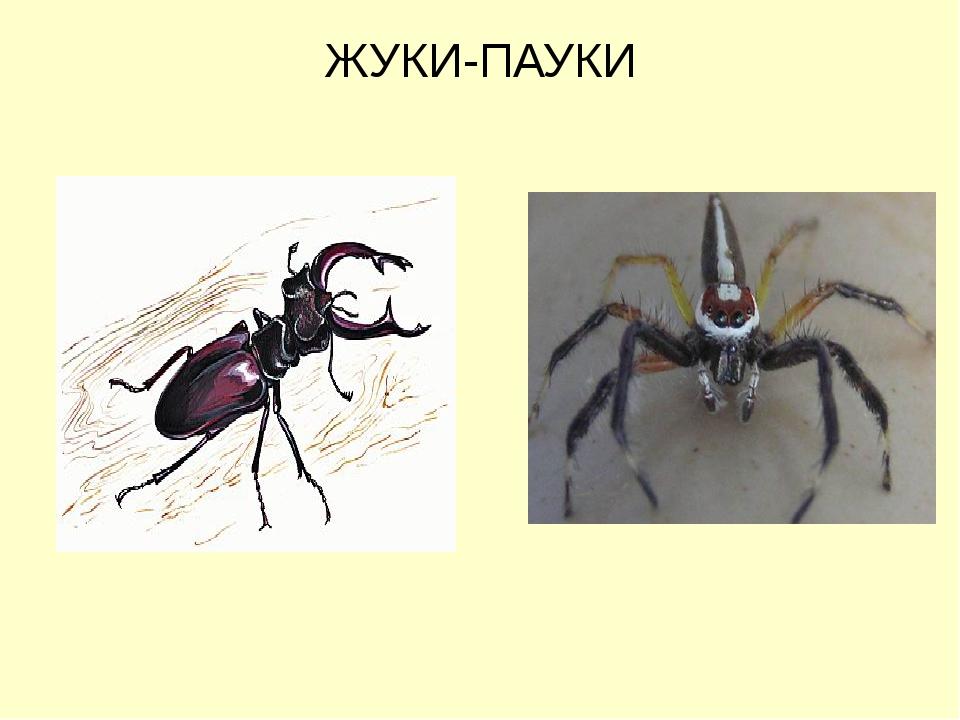 ЖУКИ-ПАУКИ