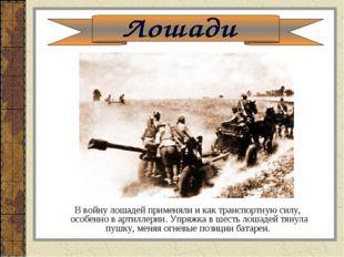 В войну лошадей применяли и как транспортную силу, особенно в артиллерии. Уп