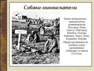 Собаки-миноискатели Наши четвероногие миноискатели разминировали Белгород, Ки