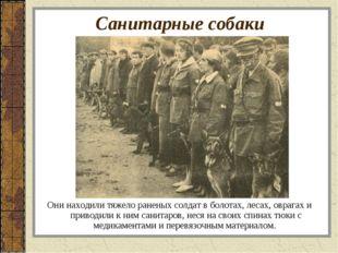 Санитарные собаки Они находили тяжело раненых солдат в болотах, лесах, оврага