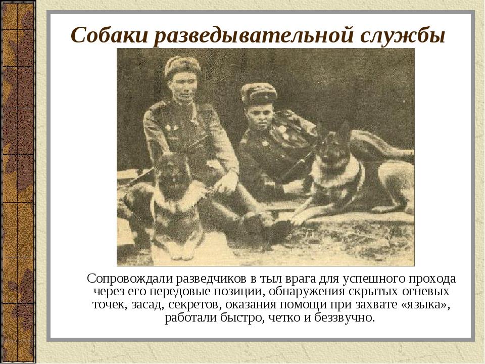 Собаки разведывательной службы Сопровождали разведчиков в тыл врага для успеш...