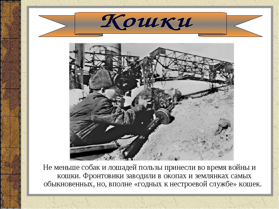 Не меньше собак и лошадей пользы принесли во время войны и кошки. Фронтовики...