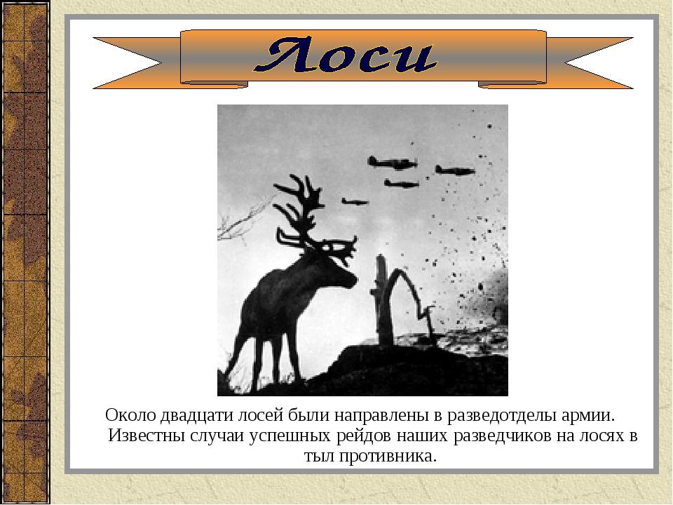 Около двадцати лосей были направлены в разведотделы армии. Известны случаи ус...