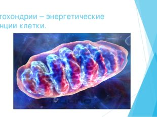 Митохондрии – энергетические станции клетки.