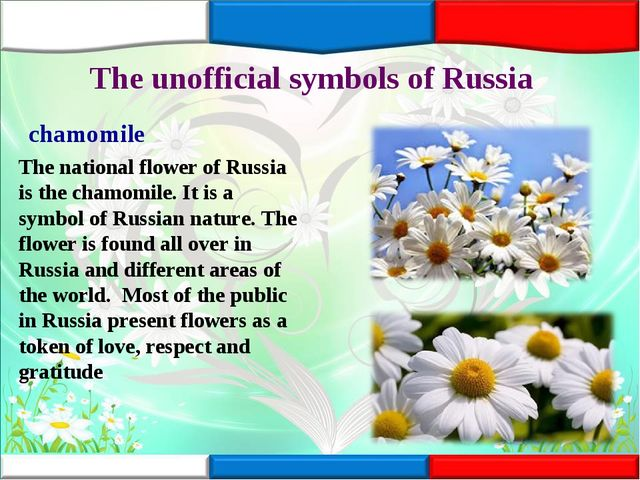 The unofficial symbols of Russia chamomile The national flower of Russia is t...