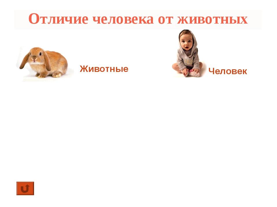 Отличие человека от животных Животные Человек 1. Изготавливает орудия труда и...