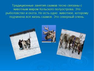 Традиционные занятия саамав тесно связаны с животным миром Кольского полуостр